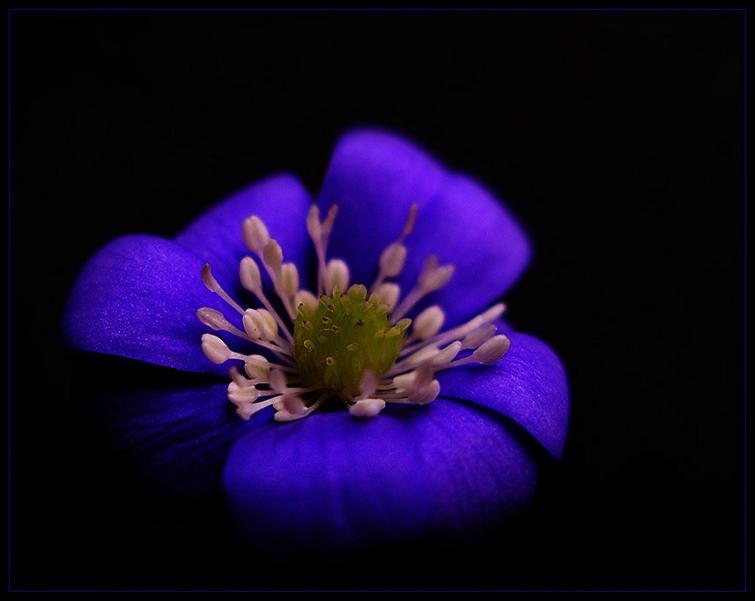 Просто красивые цветы фото